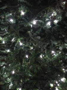 Christmas Lights on a fir tree, up close