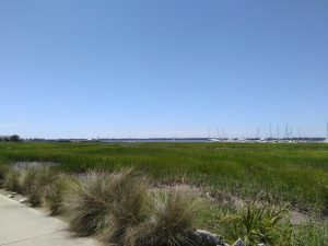 Green sea grass with sailboats on the water in the distance.