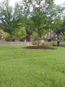 Lawn by the ER at MUSC