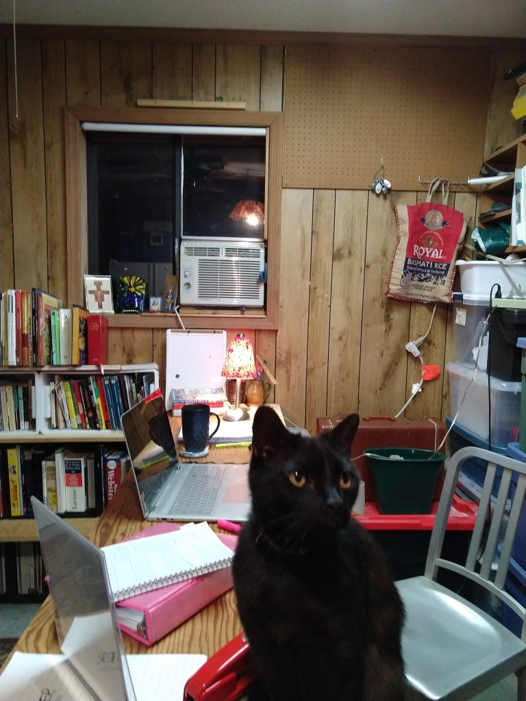 Improvised desk and bookshelves made out of crates and boards, cat in foreground. Occupies old garage space.